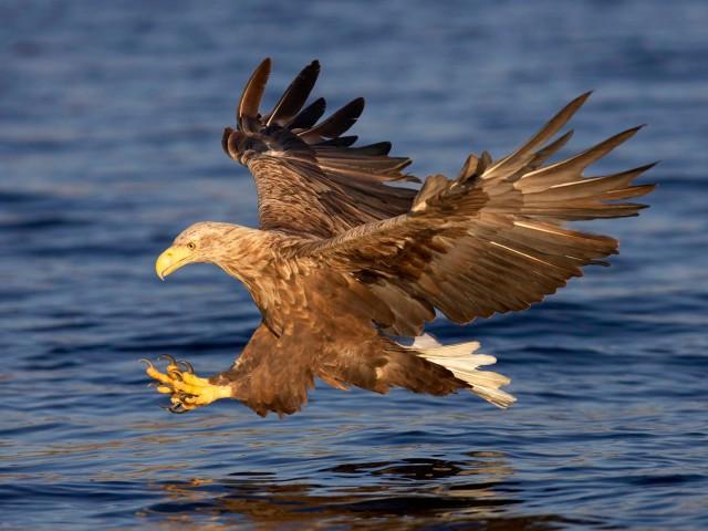 Крылатый властелин морей
